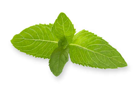 Mint leaf isolated on white background with shallow depth of field Archivio Fotografico