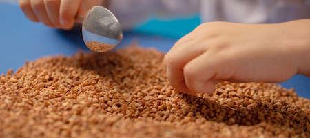 Raw buckwheat groats on a blue background Zdjęcie Seryjne