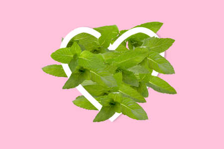 Green leaves of mint shaped as heart frame, isolated on white Archivio Fotografico - 160651529