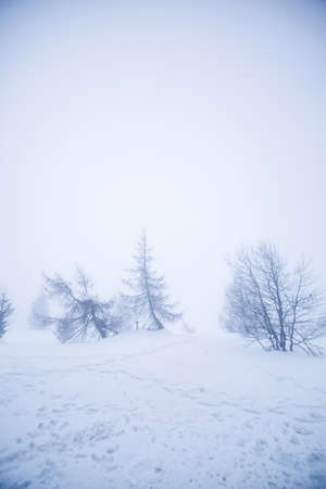 Winter landscape with bare tree in the fog and a lot of snow