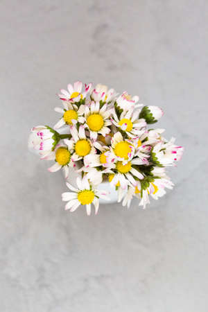 Beautiful daisy flowers in ceramic white vase on ultimate gray background from above Archivio Fotografico