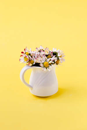 Beautiful daisy flowers in ceramic white vase on illuminating background from above Archivio Fotografico