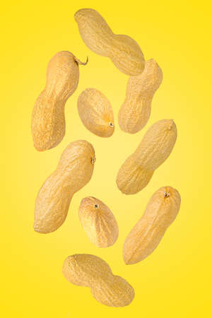 Falling down peanut in shell isolated on yellow