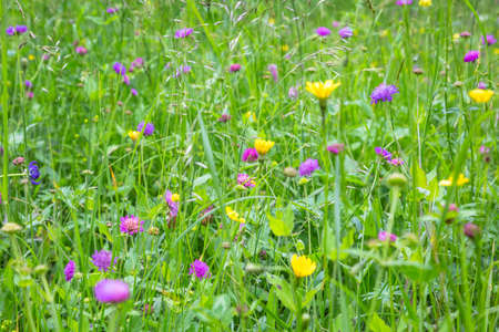 A soft focus grassy meadow of flowers
