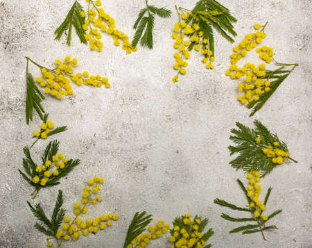 Frame with spring mimosa flowers flat lay on light background