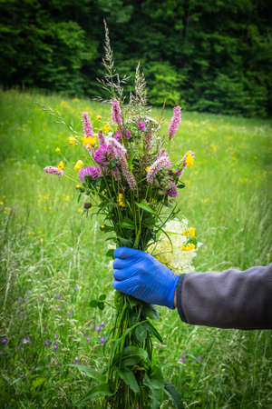 bunch of flowers collected in the countryside Archivio Fotografico