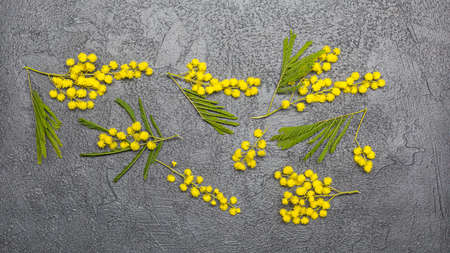 Greeting Card International Women's Day on March 8th. Branch of mimosa on concrete background. Space for text. Soft focus Archivio Fotografico