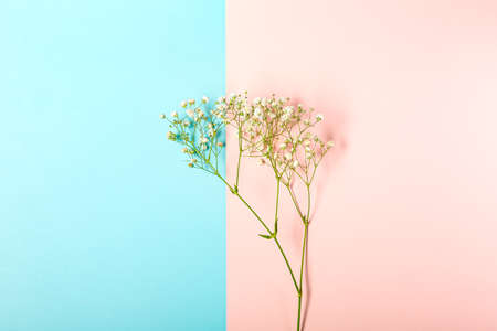 Creative banner with fresh white babys breath flower