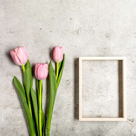 Fresh pink tulip flowers on ultimate gray wall Archivio Fotografico