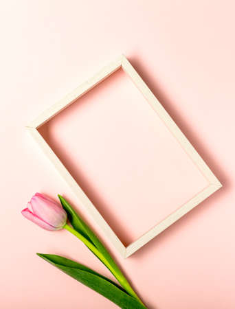 Flat lay with tulip flowers on pastel pink