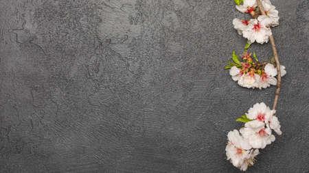 spring background with fresh flower on black background.