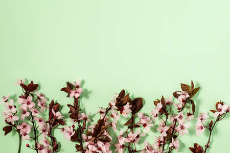 spring background with fresh flower on green background.