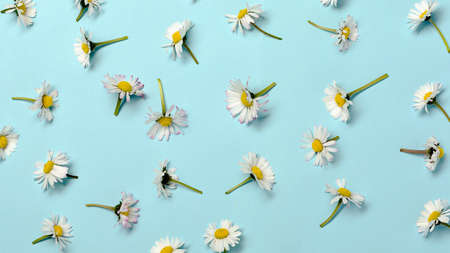 Pattern with fresh daisy flowers on pastel backround.