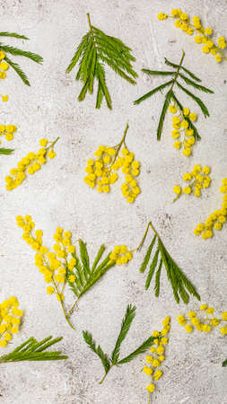 Pattern with spring mimosa flawers flat lay on light background Archivio Fotografico