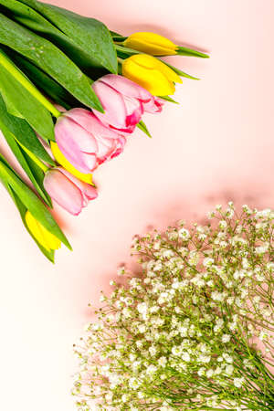 Fresh pink and yellow tulip flowers on on pastel pink Archivio Fotografico