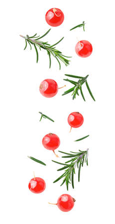 Flying rosemary and cranberry berries on white background Archivio Fotografico