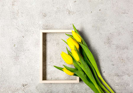 Fresh yellow tulip flowers on ultimate gray wall