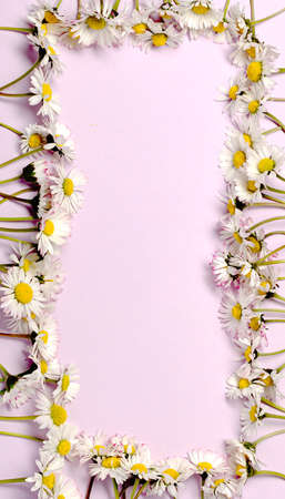 Pattern with fresh daisy flowers on pink pastel backround. Archivio Fotografico
