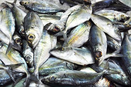 Many Mackerel Fish Fresh