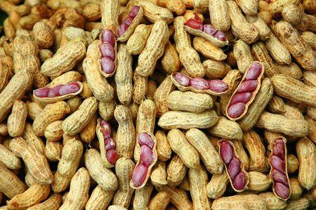 groundnut: Groundnut Ripe Boil