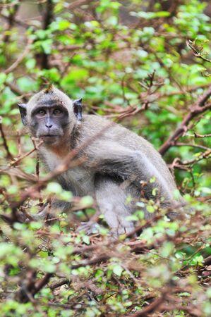 deportment: Excite Monkey See Glower Stock Photo