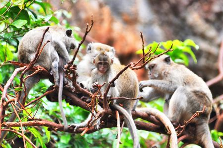 Family Monkey Baby See