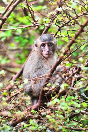 deportment: Young Monkey Sit See Stock Photo