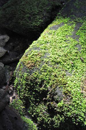 Moss Stone Daylight Stock Photo