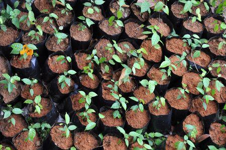 Little Plant Seedling Bag Stock Photo