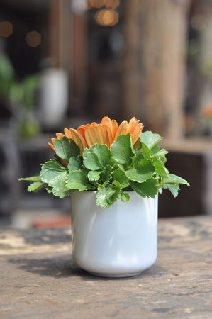 Cup Flower Wood Table Decoration Stock Photo