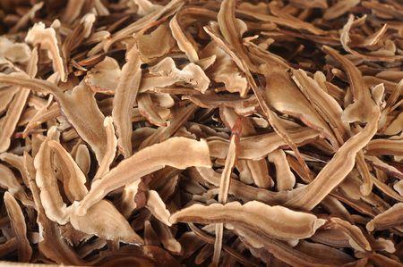 Mushroom Lingzhi Dry Many