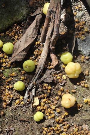 Small Star Gooseberry Leaf Ground Stock Photo - 7483403