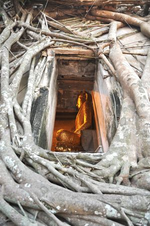 Buddha Vent Frame Root Wall Stock Photo