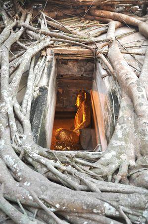 teorema: Muro de ra�z de Buda Vent Frame  Foto de archivo