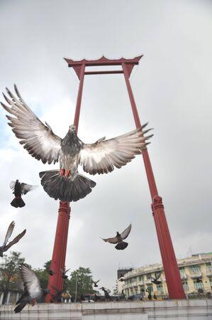 Sao Chingcha Wat Suthat Flying Pigeon