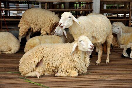 Sheep Park Grass Group
