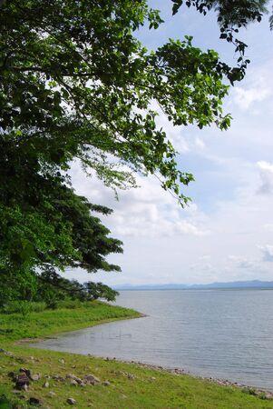 Big Lake Tree Day Thailand