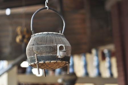 Francolin Bird Hang Thailand Wood Birdcage Stock Photo