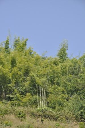 Bamboo Hill Mountain Thailand Outdoor