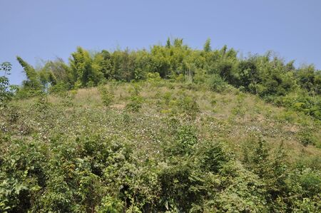 Cotton Field Mountain Hill Garden Thailand
