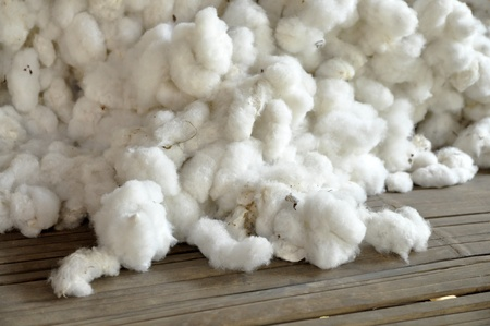 cotton ball: Cotton Group Raw Material Pill Stock Photo