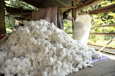 Cotton Pill Group Raw Material Stock Photo