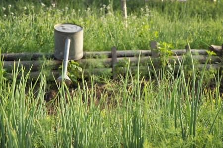 Garden Watering Parsley Leek Farm