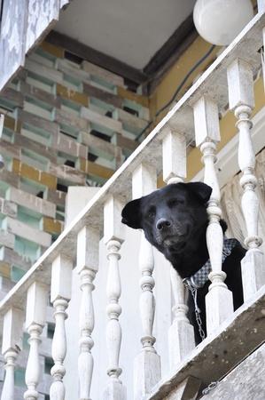 Head Dog Bar Collar House Chain