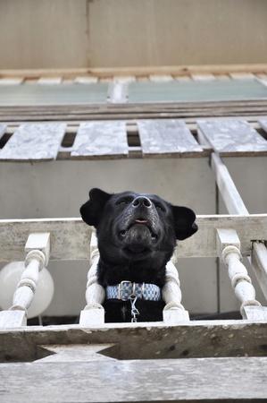 Head Dog Chain Collar Bar House Stock Photo