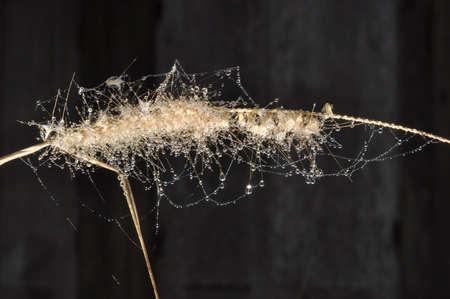 messily: Bubble Fresh Grass Dew Drop Flower