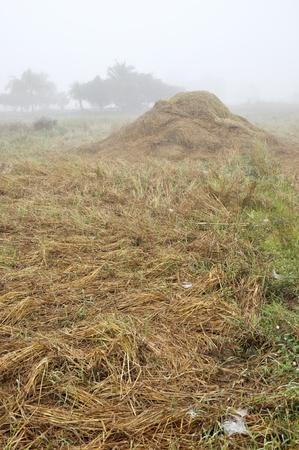 Hay Straw Fog Thailand Field Morning