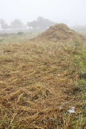 Hay Straw Thailand Field Morning Fog
