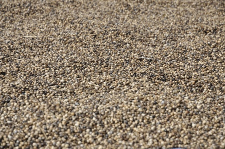 Millet Seed Background Day Many Stock Photo - 11567434