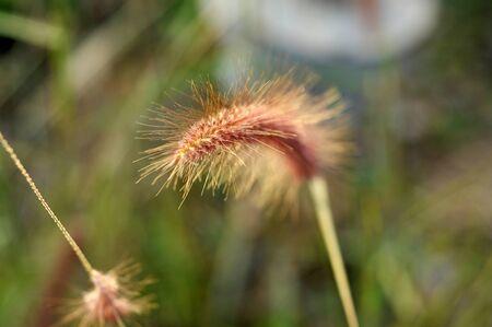 Closeup Flora Grass Nature Flower Outdoor